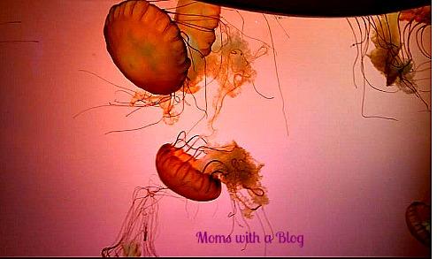 Jellyfish Exhibit
