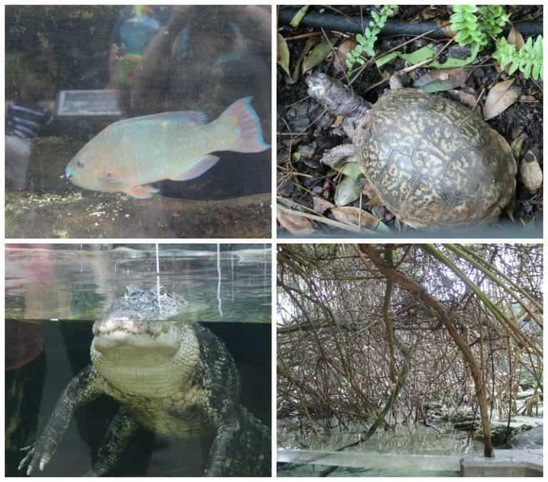 florida aquarium wetlands trail