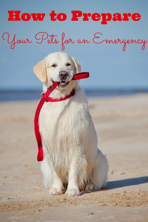 Prepping pets for an emergency