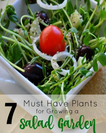 How to Create a Salad Garden