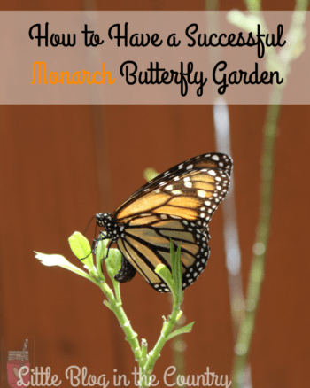 How to Have a Successful Monarch Butterfly Garden