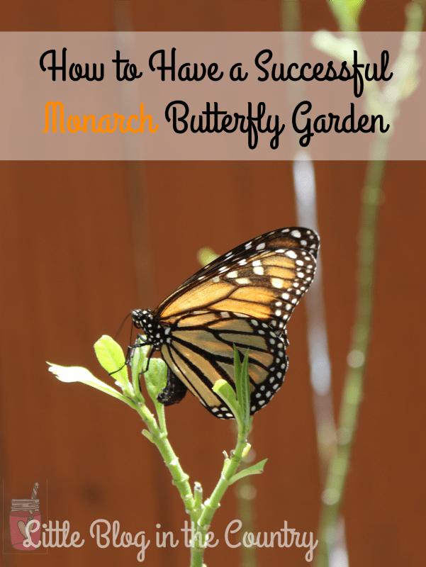 successful-monarch-butterfly-garden