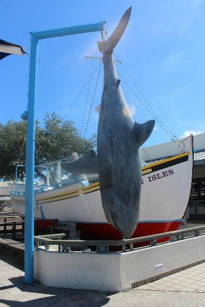 tarpon springs shark and boat