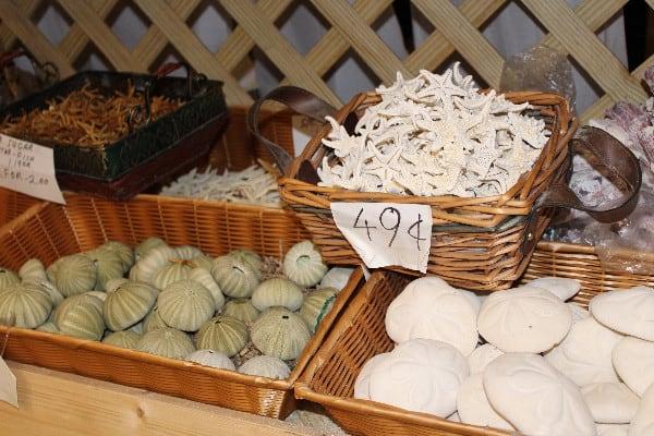 tarpon springs shells