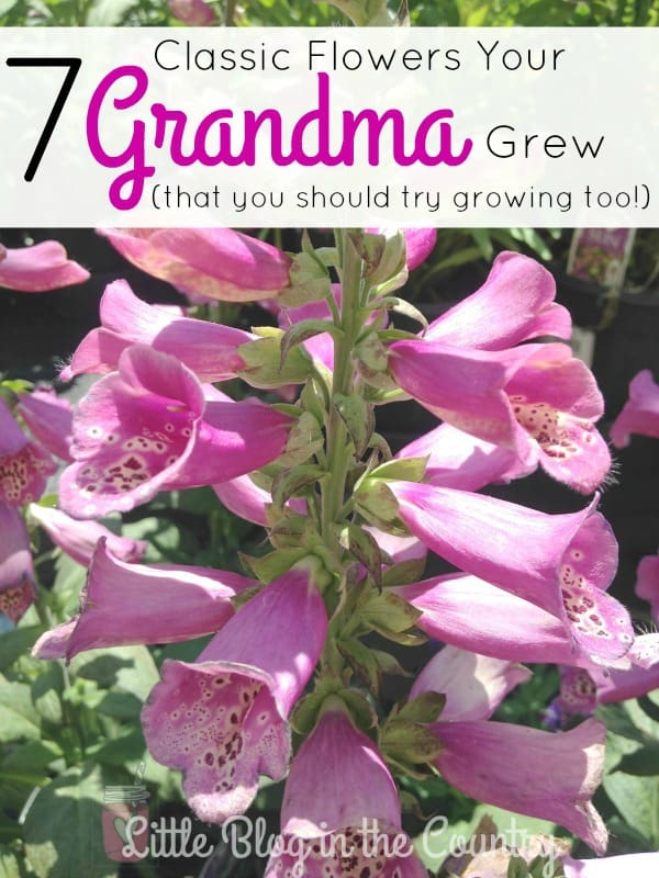 7 Flowers Your Grandma Grew
