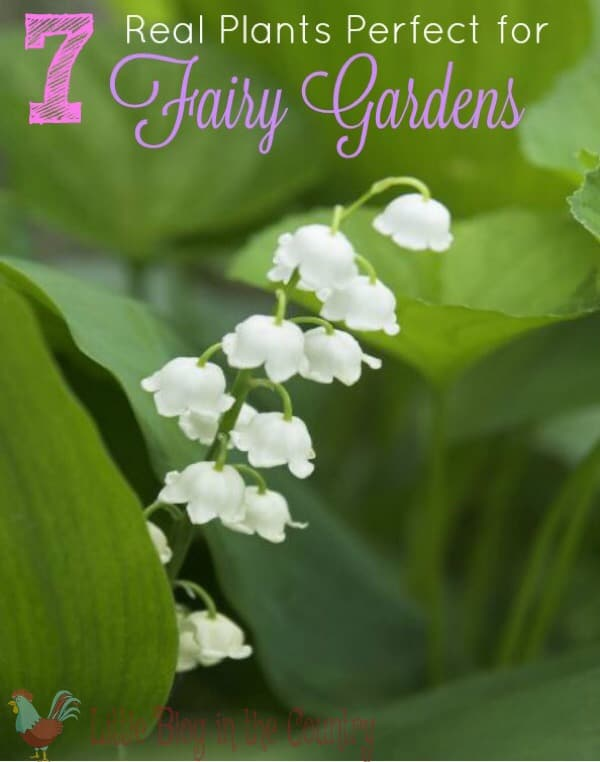 real plants for fairy gardens