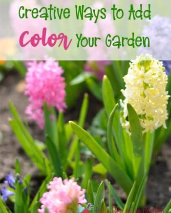 How to add more color to your garden