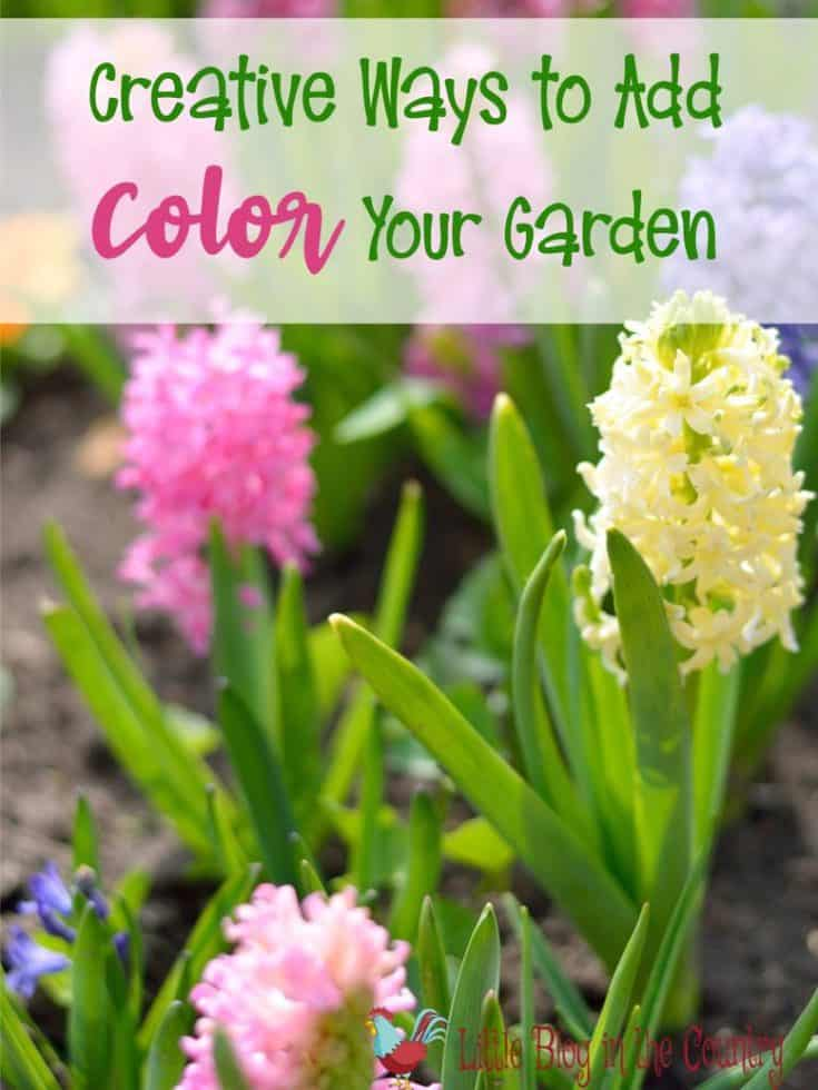 Creative Ways to Add Color to Your Garden