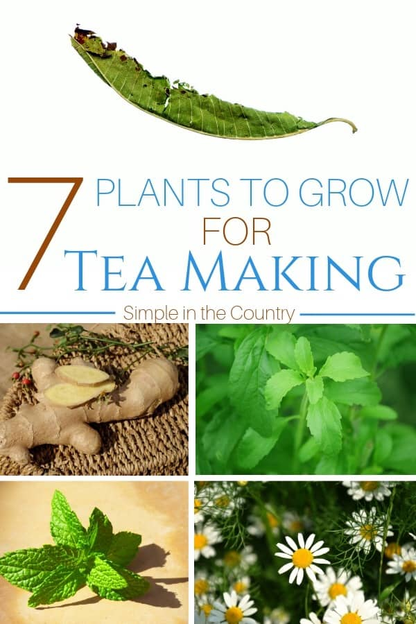 Pictures of plants and herbs to grow for a medicinal tea garden
