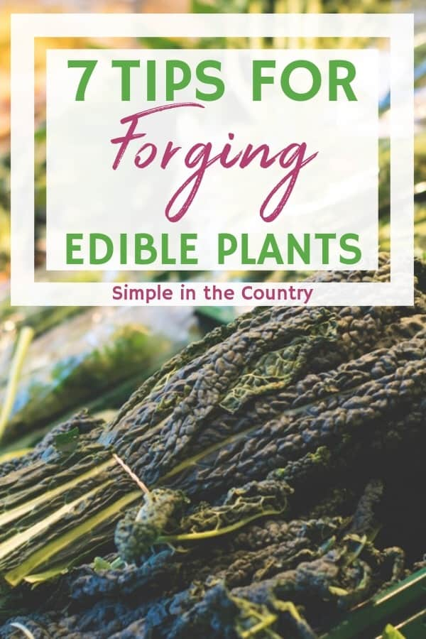 edible foraged plant