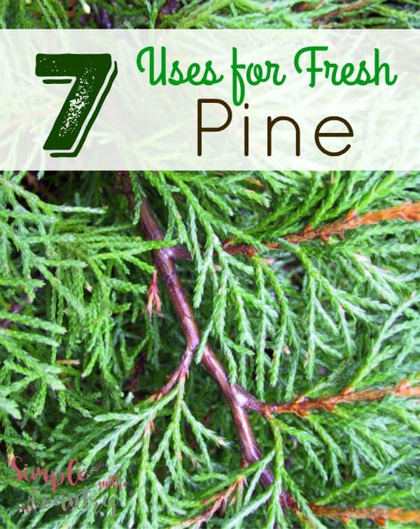 Uses for fresh pine
