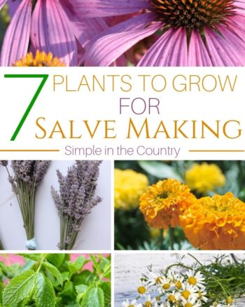Plants to grow for salve making