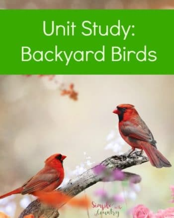 Cardinals on a perch backyard birds unit study