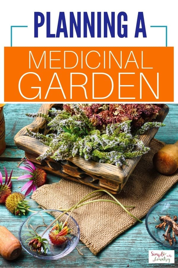 medicinal plants in a bowl