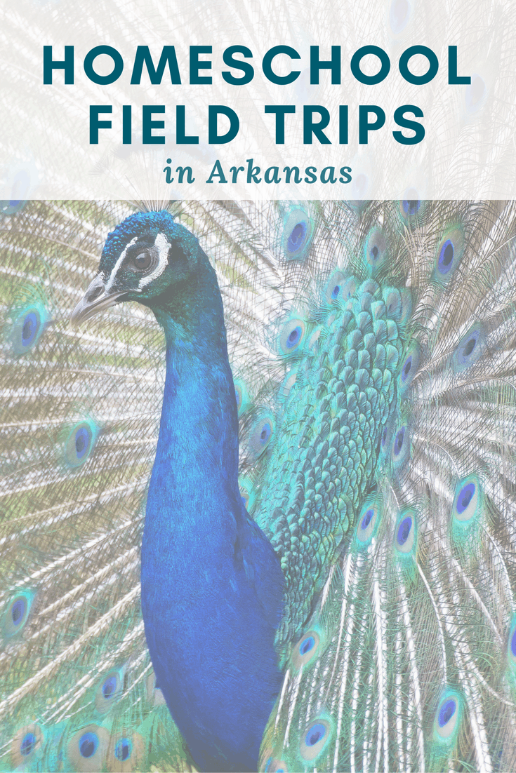 Homeschool Field Trip Ideas in Arkansas