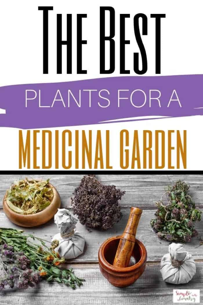 plants for a medicinal garden